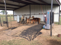 Equine Centers and Stables